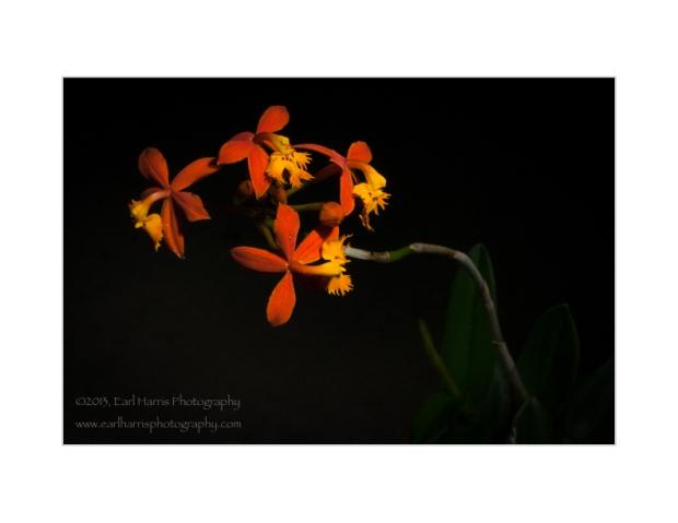 Orchid-WebImage