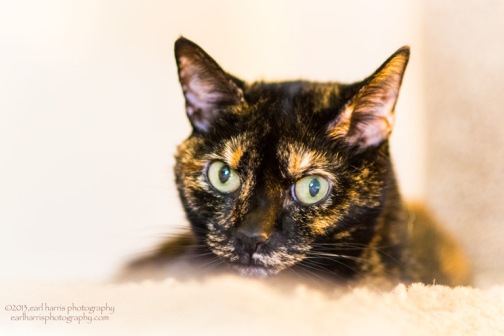 """Cleo Kitty"" [Click on image to enlarge/reduce its size.] Nikon D800, ISO 2500, f/1.8 at 1/125 sec., 85 mm"
