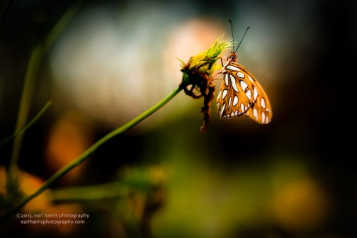 """Butterfly Glow"" [Click on image to enlarge/reduce its size.] Nikon D800, ISO 400, f/1.8 at 1/800 sec., 85 mm"