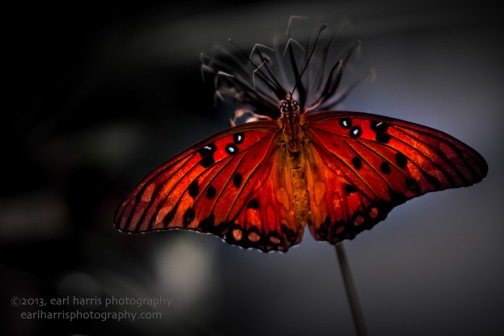 """Butterfly Shadows"" [Click on image to enlarge/reduce its size.] Nikon D800, ISO 400, f/2.0 at 1/400 sec., 85mm"