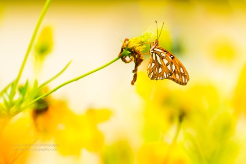 """Butterfly Sunshine"" [Click on image to enlarge/reduce its size.] Nikon D800, ISO 400, f/1.8 at 1/1000 sec., 85 mm"