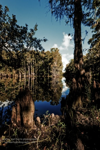 """""""Morning Swamplight"""" [Click the image to enlarge/reduce its size.] Nikon D800, ISO 640, f/20 at 1/80 sec., 16 mm"""