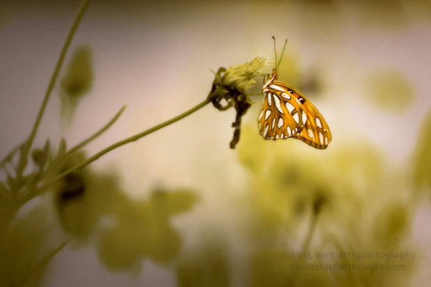 """Butterfly Sunshine (reworked)"" [Click the image to enlarge/reduce its size.] Nikon D800, ISO 400, f/1.8 at 1/1000 sec., 85 mm"