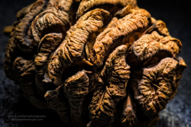"""Pinecone"", Nikon D800 in DX mode, ISO 100, f/25 at 15 sec., 60mm micro"