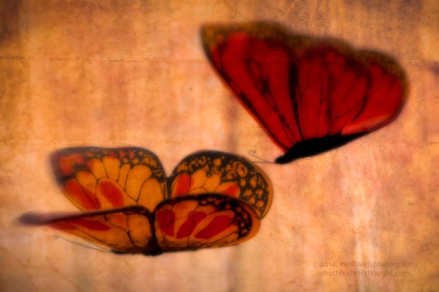 """Butterfly, Flutter By"", Nikon D800, ISO 800, f/10 at 1/50 sec., 300mm"