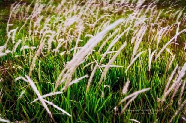 """High on Grass"", Nikon D800, ISO 400, f/20 at 1/125 sec., 28mm"