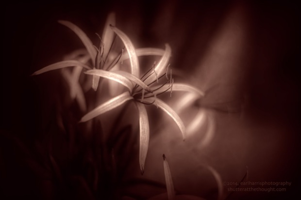 """Lily Light"", Nikon D800, ISO 320, f/2.0 at 1/1250 sec., 50mm"