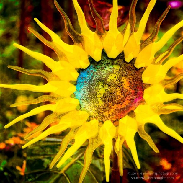 """Reflecting the Sun"", Nikon D800, ISO 800, f/2.8 at 1/500 sec., 170mm"
