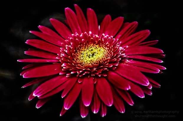"""Gerbera Daisy, Transformed"", Nikon D100, ISO 200, f/5.6 at 1/250 sec., 98mmClick the image to view larger size and available print options."
