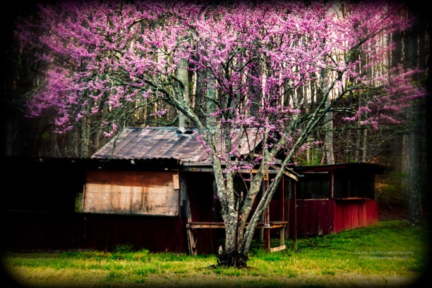 """Redbud 2"", Nikon D800, ISO 400, f/5.3 at 1/40 sec., 98mmClick the image to view larger size and available print options."