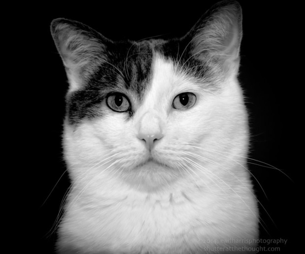 """Black & White Cat"""