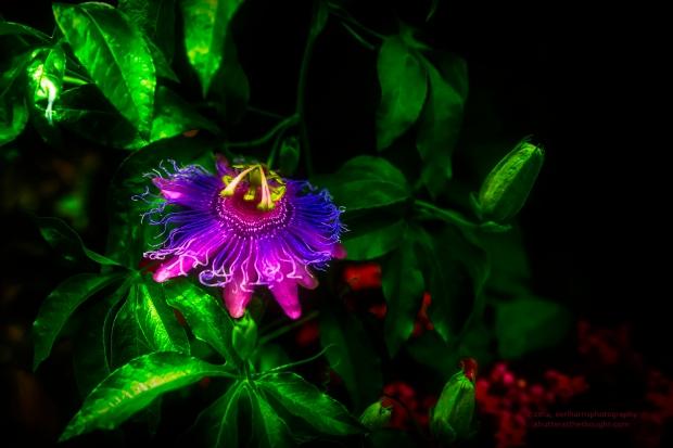 """A Passionate Nature"", Nikon D300, ISO 200, f/5.6 at 1/60 sec., 130mm"