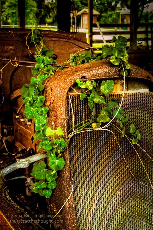 """""""Iron & Ivy"""", Nikon D800, ISO 640, f/7.1 at 1/200 sec., 45mm"""