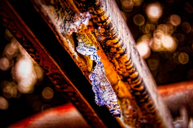 """Texture and A Peel"", Nikon D800, ISO 640 f/5.3 at 1/320sec., 92mm"