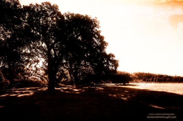 """""""Silhouette of Trees"""", Nikon D800, ISO 250, f/13 at 1/80 sec., 28mm"""