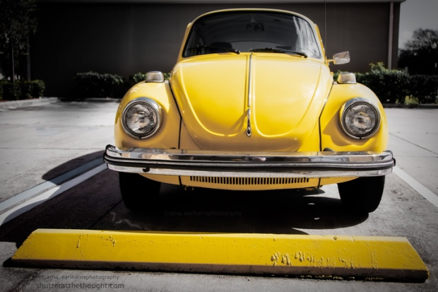 """Yellow Bug"", Nikon D800, ISO 250, f/3.5 at 1/4000 sec., 28 mm"