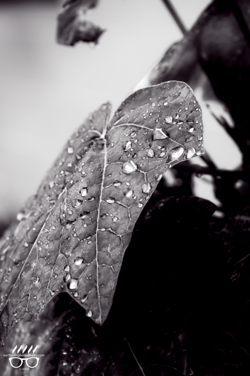 copyright2016_EarlHarrisPhotography_Dropping-Leaves