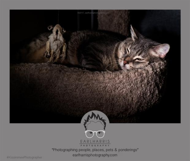 catandmousecopyright2017earlharrisphotography-com
